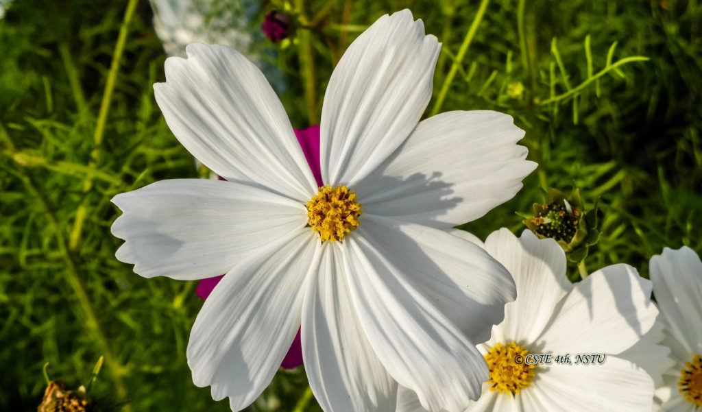 Floral Beauty of NSTU. Img: 1